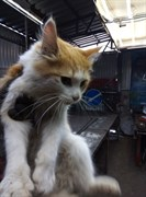 Кошка на Робеспьера