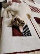 Кошка на Львовском