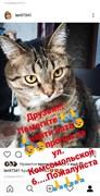 Кот на ул. Комсомольской