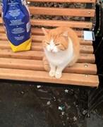 Кошка на Верхней терассе