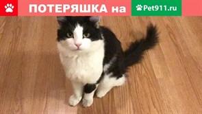Кот на Буинской
