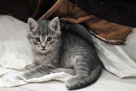 Котенок у салона Мерседес