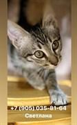Кот на Жигулевской