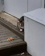Кот на станции Верхняя Терасса