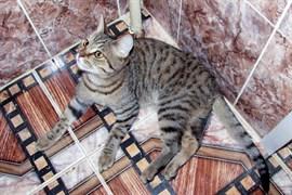 Кот у ДШИ 8