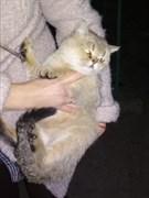 Кошка в Новом городе