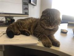 Кошка на Карбышева
