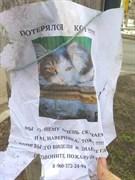 Кот на Казанской