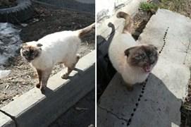 Кошка на Ипподромной