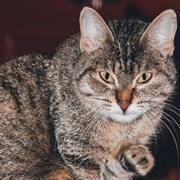 Кошка ЭЛЛИ
