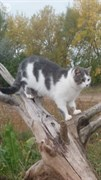 Кошка Маша на Нижней в Мостотряде