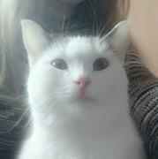 Кошка ДУСЕНЬКА