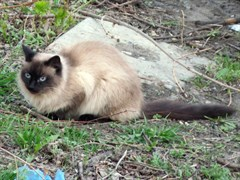 Кошка Кира в Засвияжье