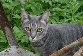Серый Кот на Ипподромной