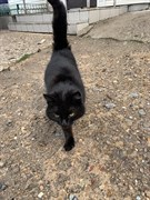Кошка на Урицкого