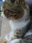 Кот в Погребах