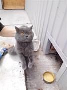 Кот на Аблукова