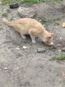 Кот на перекрестке в Дальнем Засвияжье