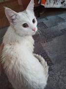 Кот на Автозаводской