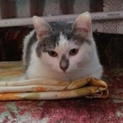 Кошка ИРИШКА