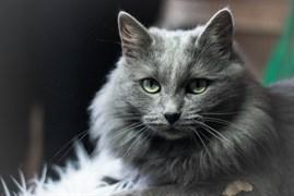 Кошка на Новосондецком 18