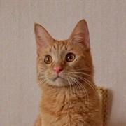 Кошка РЫЖКА