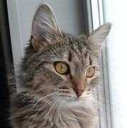 Кошка ПУША