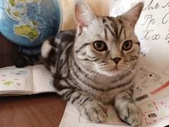 Кот Гучи на Верхней
