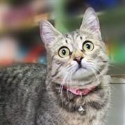 Кошка МИЛА