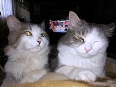 Два кота на Севере