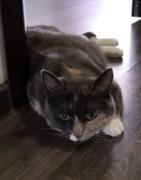 Кошка Мурка на Полбина