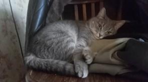 Кошка Анфиса у Волжанки
