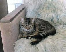 Кошка у 38 магазина