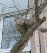 Кошка в красном ошейнике на Рябикова