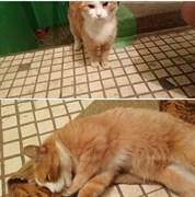 Кошка на Камышинской