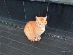 Кот у Солнышка