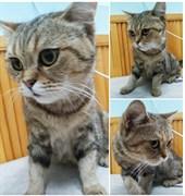 Кошка в Киндяковке