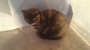 Кошка на Варейкиса - Аверьянова