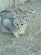 Кошка в дальнем Засвияжье