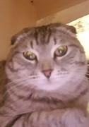 Кот на Толбухина