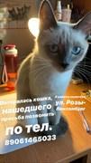 Кошка на Р. Люксембург