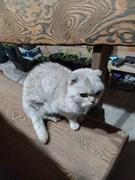 Кот или кошка в Архангельском
