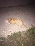 Кот на Ливанова