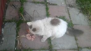 Котенок на Камышинской  - Корунковой
