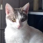 Кошка ТЕРРИ