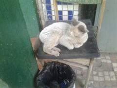 Кот на Варейкиса - Кольцевая