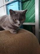 Кошка на Архангельского