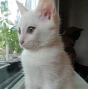 Котёнок ШУРИК
