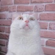 Кошка ЖОРОЧКА