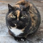 Кошка ЗОЯ